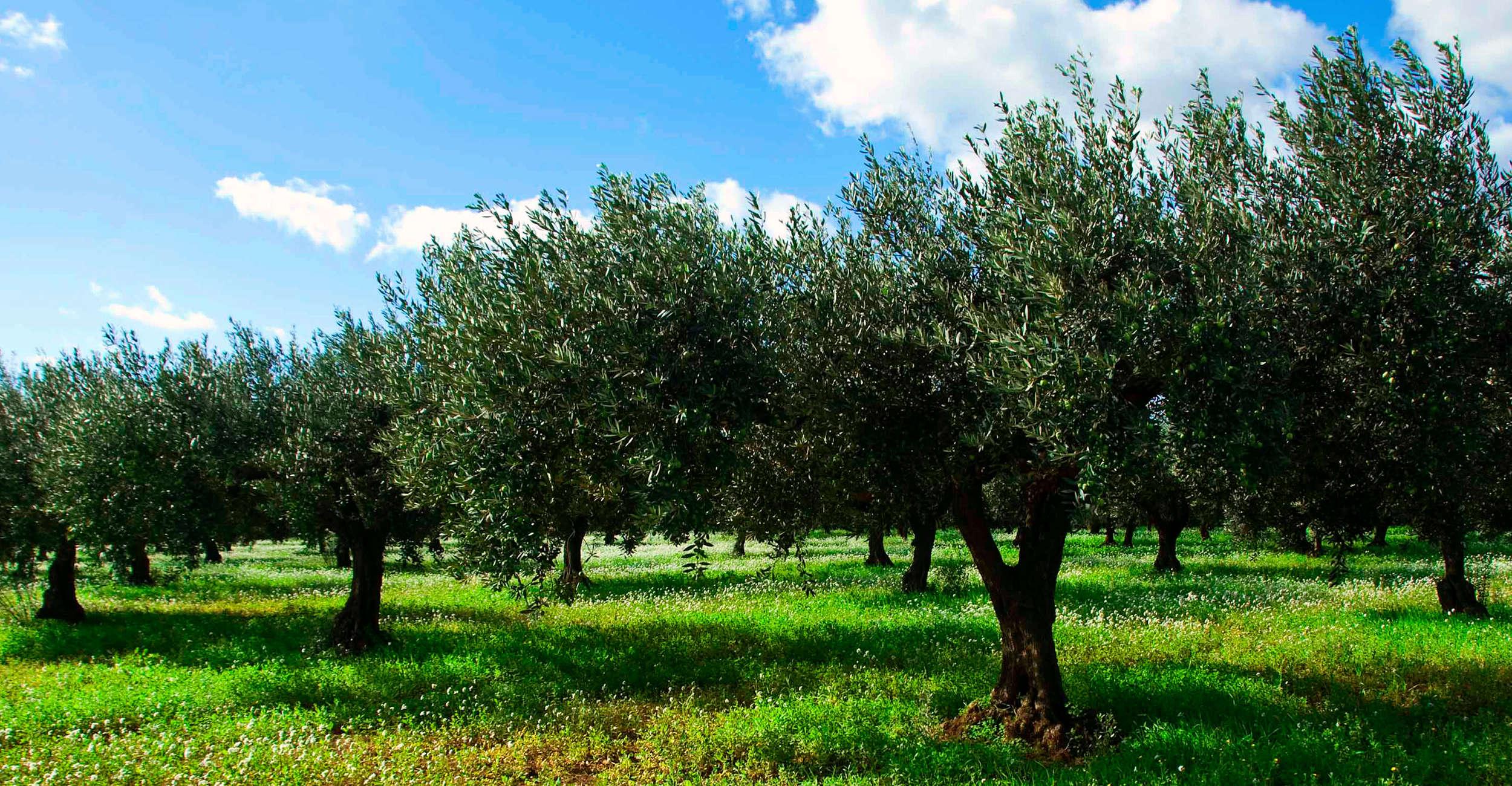 La produzione del Grana Padano Biologico