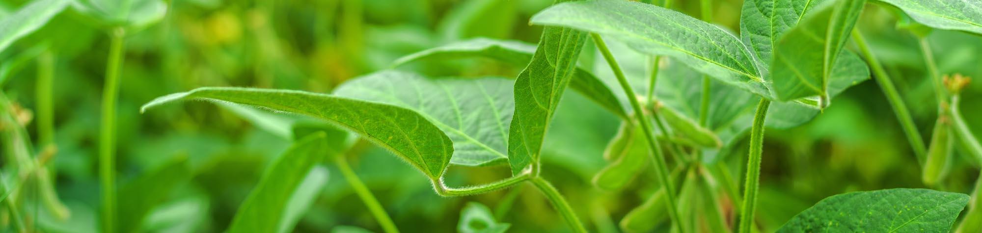 La pagnotta biologica prodotta dalla bio-filiera locale